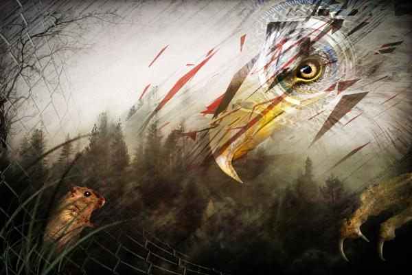 The raptor by cbrundage