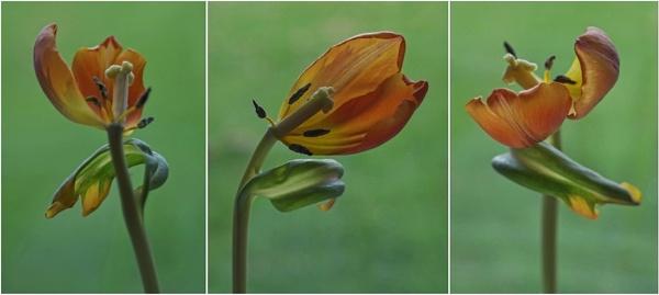 Triptych...... 2 by Mollycat