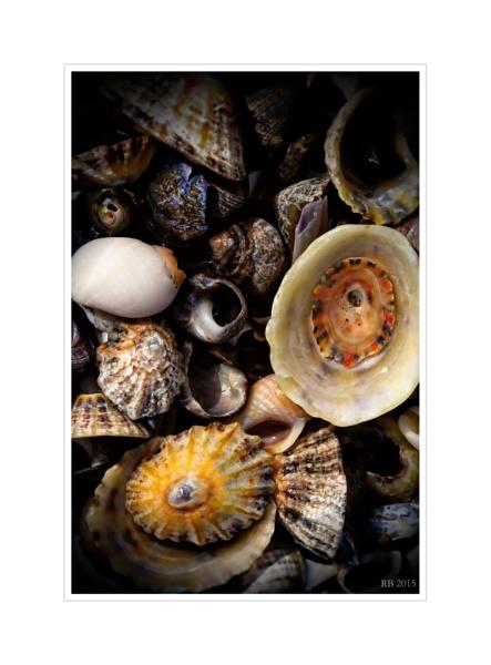 "\""Beach Shells\"" by spideog"