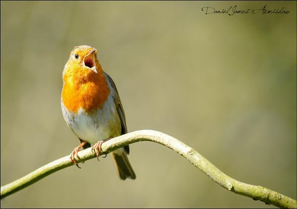 \'Sing for Spring\' by danja