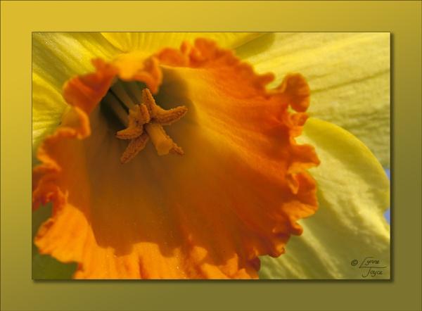 Springdicators 2 by LynneJoyce