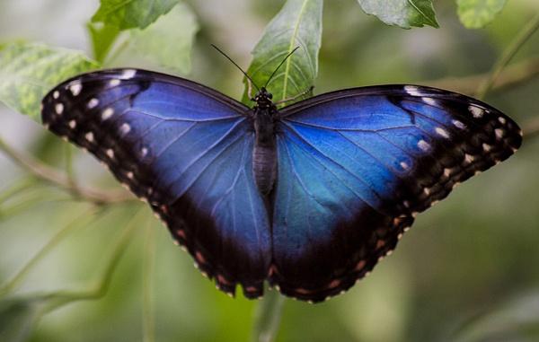 Butterfly V by SimplySteph