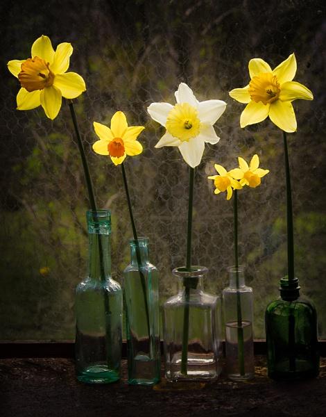 Daffodils and glass by HelenaJ