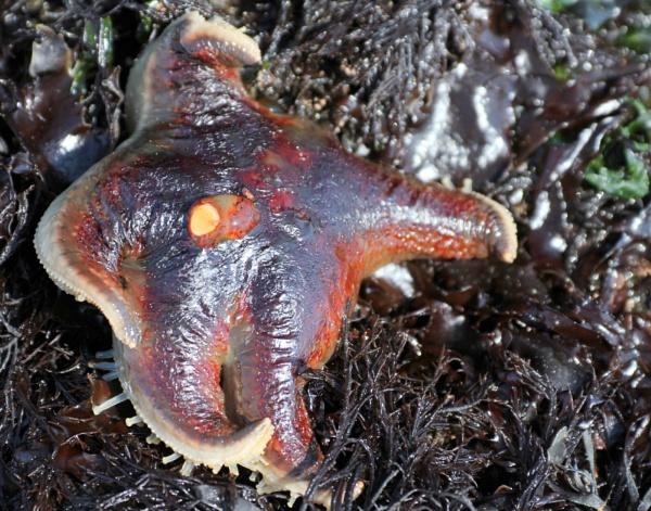 StarFish  Less Common by tonyguitar