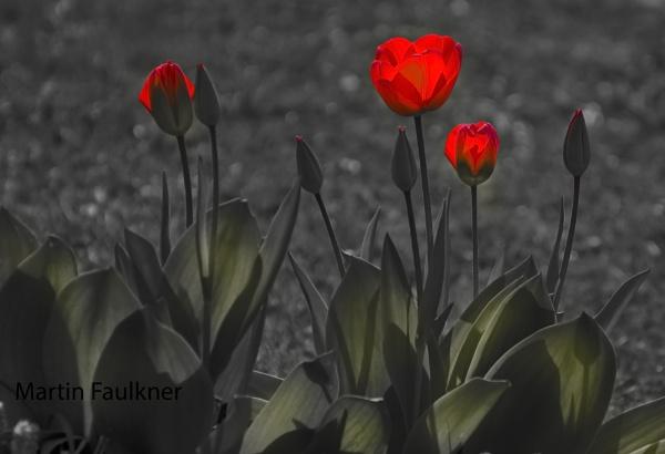 Red by martfaulkner