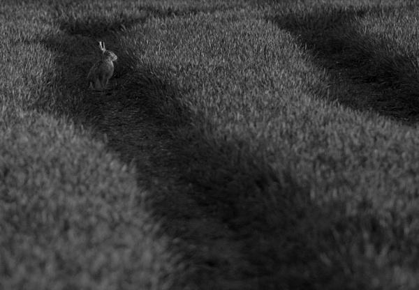 Last Light by Putnam