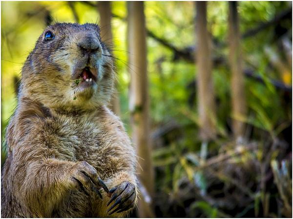 Bertie Beaver by biglog