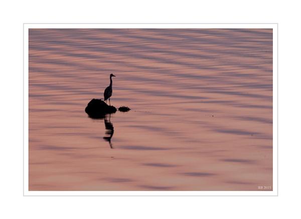 "\""Heron at Sundown\"" by spideog"