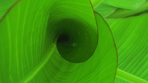 leaf vortex by KumarVishwarup