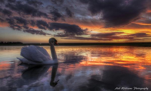 Swan lake by alfie99