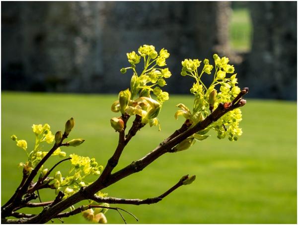 Springtime by malleader