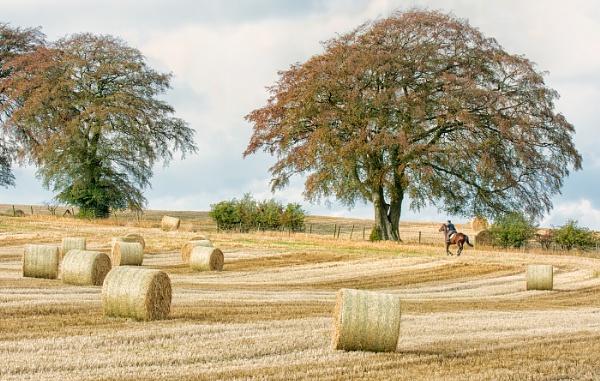 Country Scene by ww2spitfire