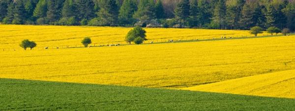 Yellow Swathe by jasonrwl