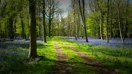 A springtime walk