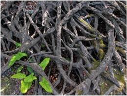 Tangled Wood