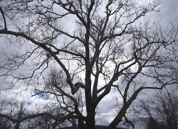 Spring:  A Walk in the Woods #2 by handlerstudio