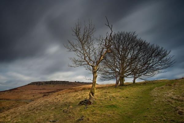 Moor Trees by Trevhas