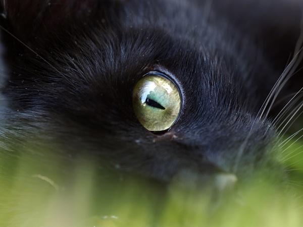Cats Eye by victorburnside