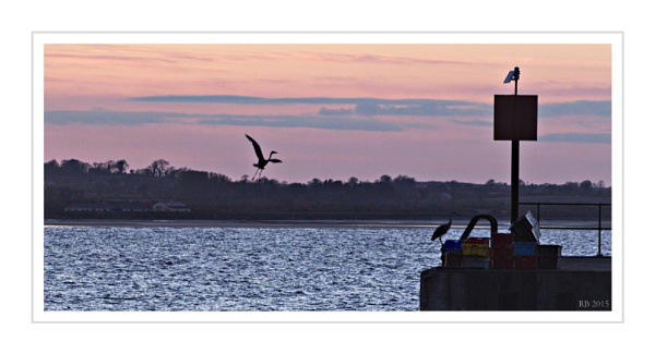 ""\""""Herons at Sundown"""" by spideog""600|325|?|en|2|8d13e322fdf8b7a0af9e608a1aaa08be|False|UNLIKELY|0.28332534432411194