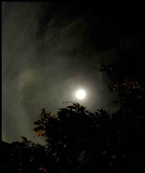 Moon light by Aldo Panzieri