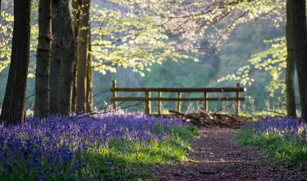Bluebell Woods by mark2uk
