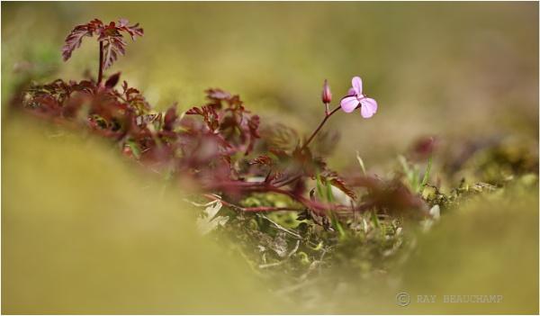 Wild Spring by RLB