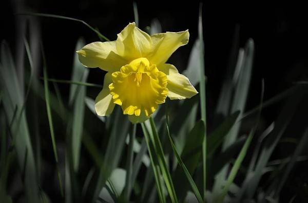 Yellow by howdog