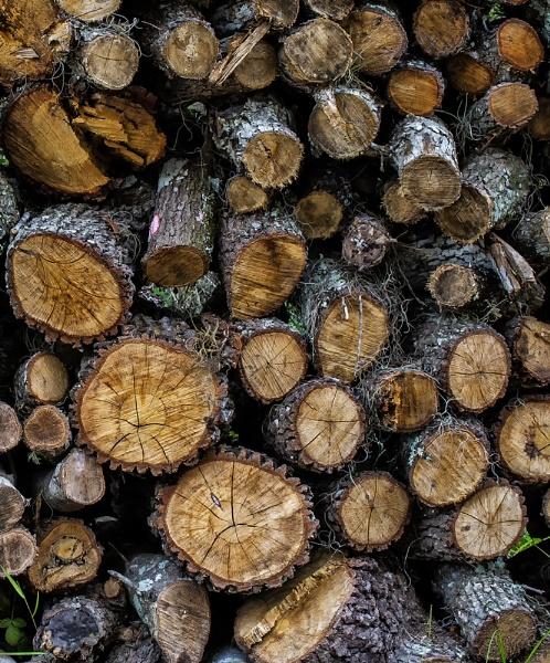 Firewood by jbsaladino