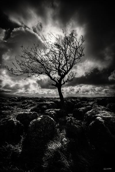 Tree by neilrwalker
