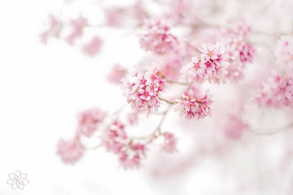Soft on spring by jackyp
