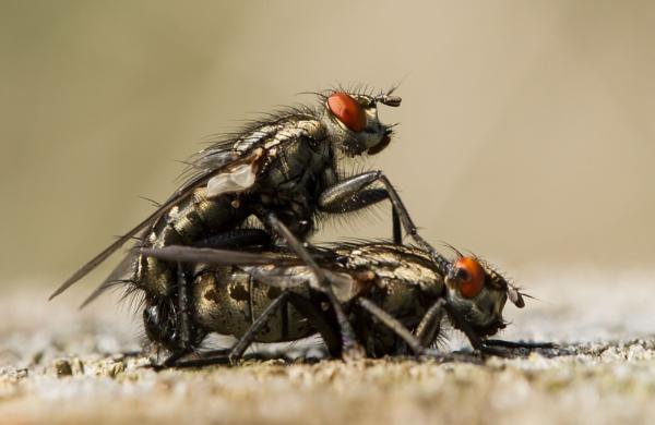 Flesh Flies by ali63
