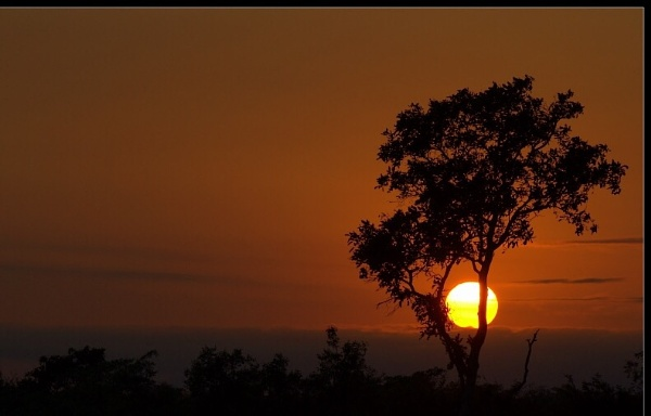 African sunset silhouettes. by ColleenA