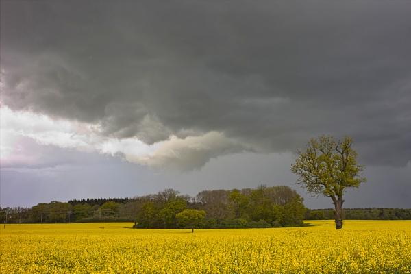 stormy by DCox