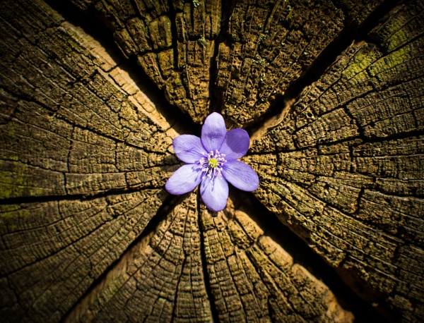 Tree flower by FloKl