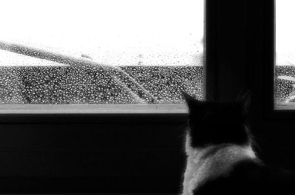 The cat who loved rain by Taran