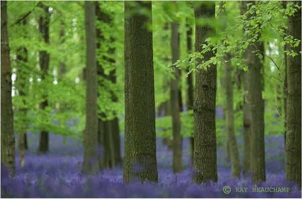 Dockey Wood by RLB