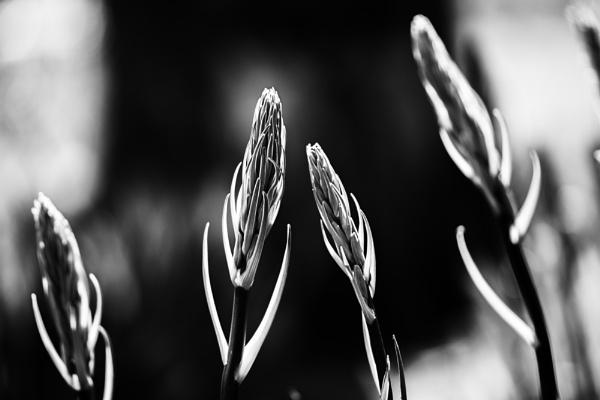 Spears of Light by WeeGeordieLass