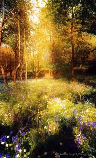 bluebells. by UrbaneMagick