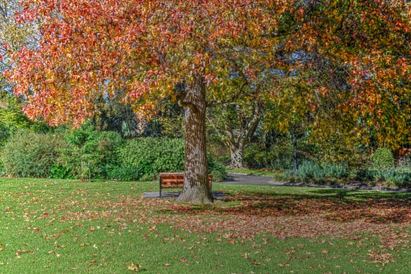 Autumnal trees by ColleenA