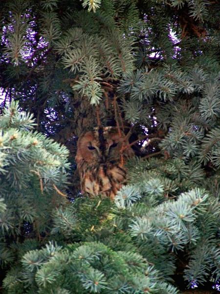 Hidden in fir by gss