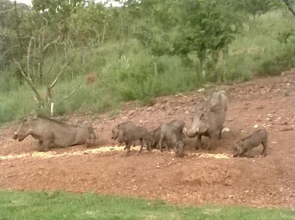 Warthogs by Shartzen