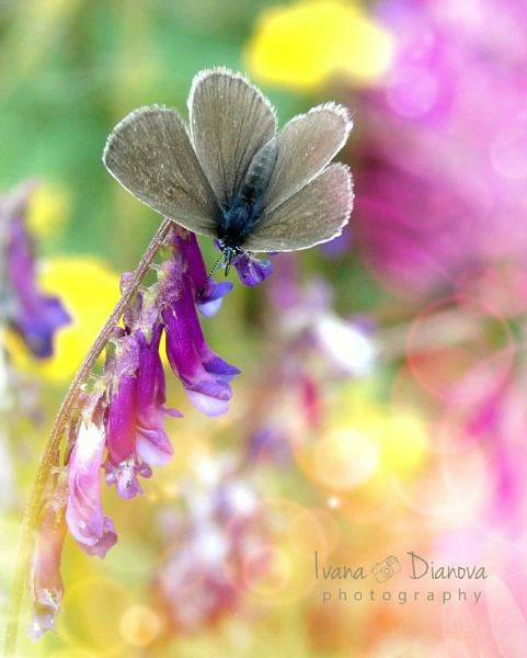 Butterfly by idiabb