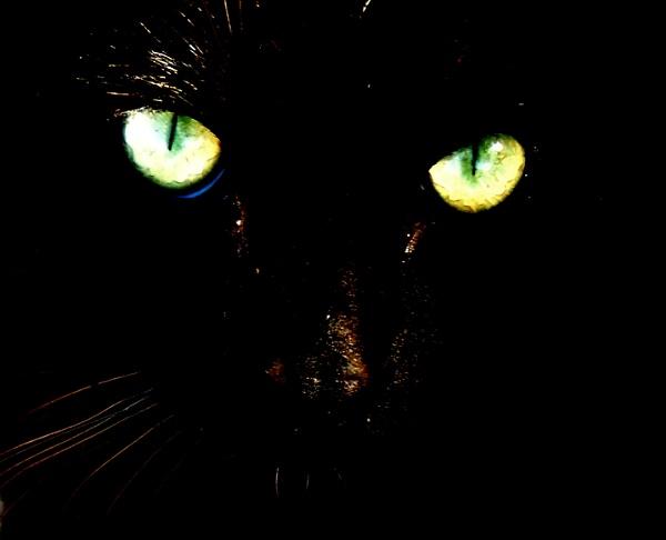 Serious killer cat by Aldo Panzieri