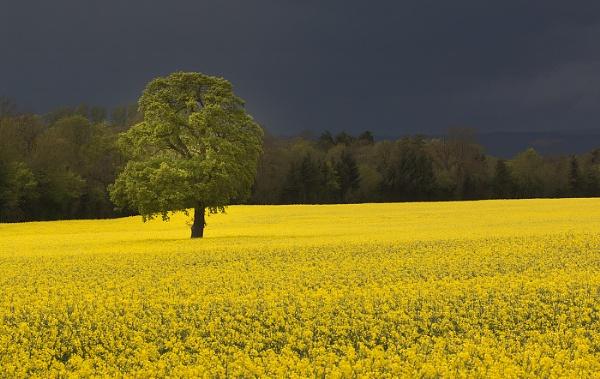 Canola Storm by Alan_Coles