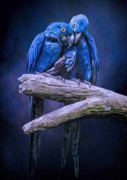 When I\'m Feeling Blue by Tarrby