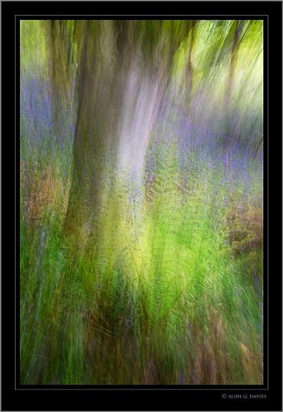 The Bluebell Wood - In abstracto by Tynnwrlluniau