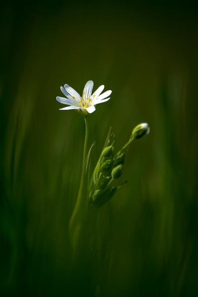 Amongst The Grass by baker58