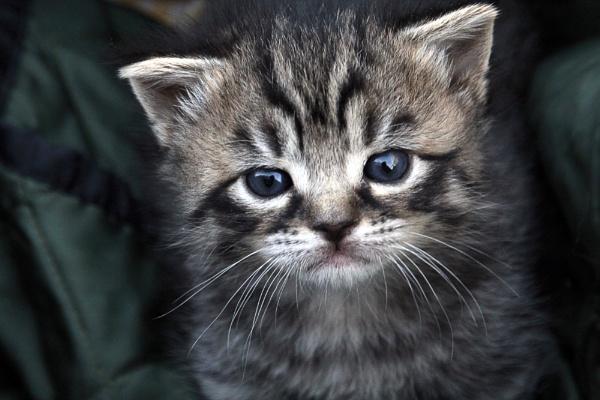 Puss by shanelaze