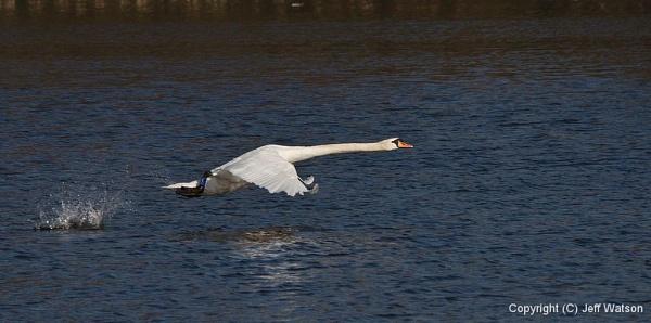 Single take-off by Fogey