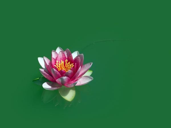 Lotus by victorburnside